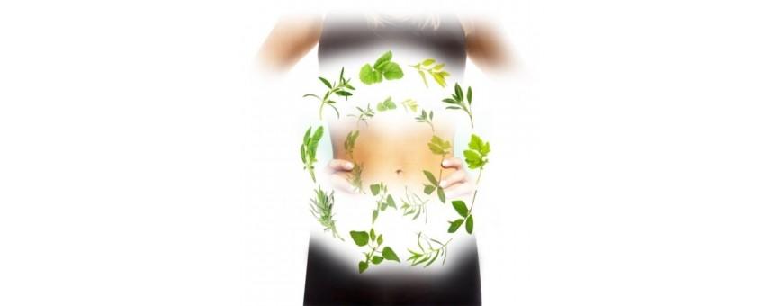Verdauungsbalance